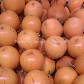 Passiflora ligularis - Fruit de la passion - Grenadille