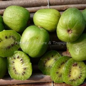 Actinidia deliciosa 'Golden Kiwi' - Kiwi jaune de Chine (femelle)