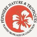 Pépinière Nature & Tropiques, producteur de plantes tropicales exotiques acclimatées